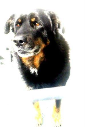 mon chien rex