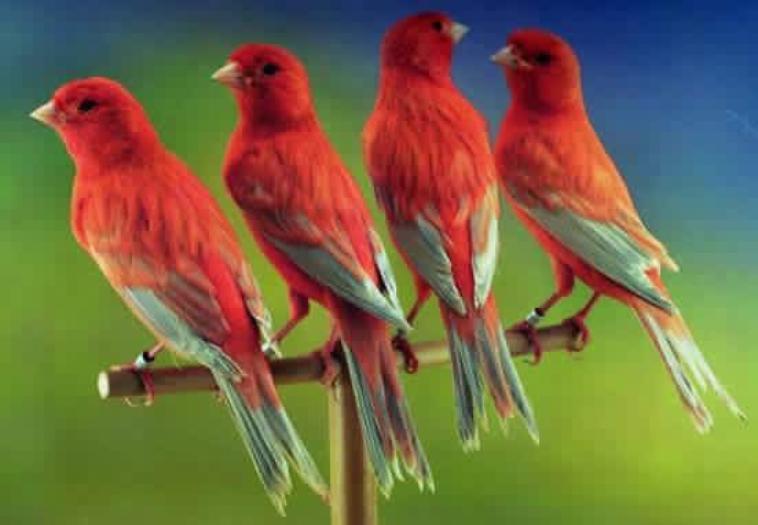 Kdo pour Carie,notre petit oiseaux du paradis