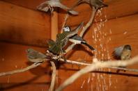 visite d un elevage d oiseaux ;cet apres midi de dimanche