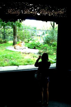 zoo (qualiter iphone )