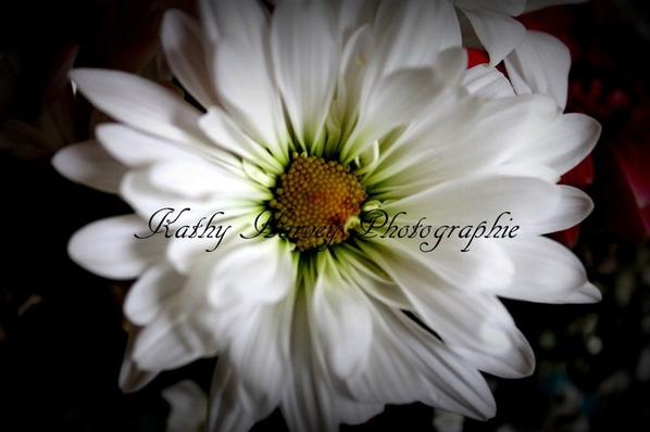 fleur dete
