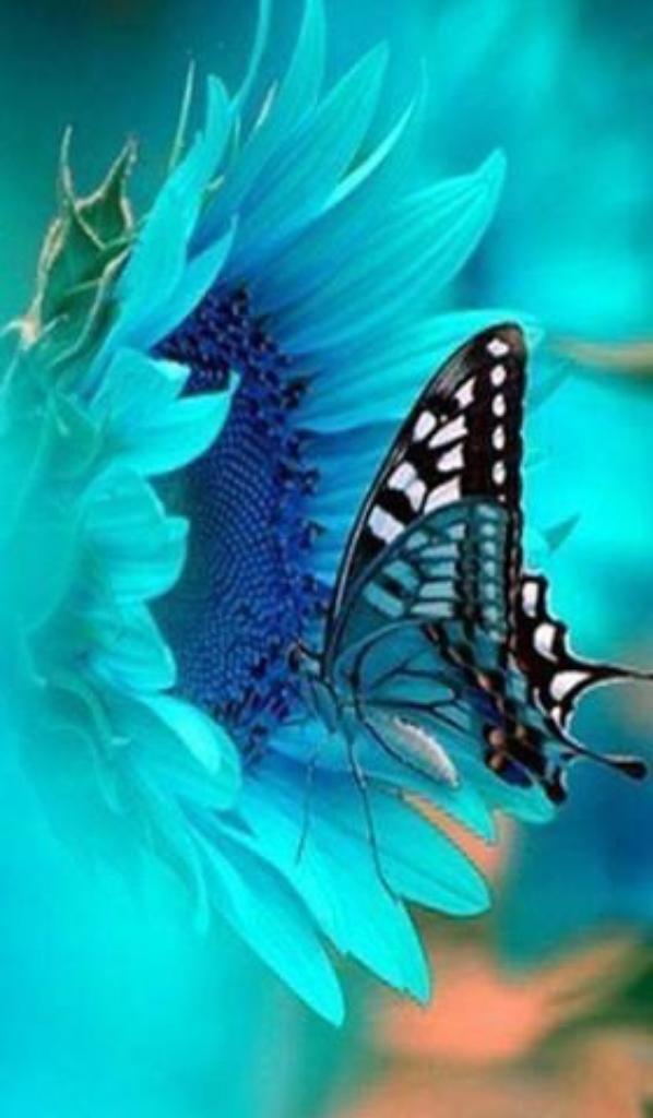 papillon du soir espoir!!!!!!!!!!!!