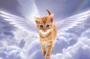 suite de tous tipe d'ange