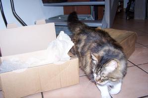 Ce n'est pas Choupette qui est arrivée dans ce carton !! mais !!!