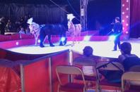 Le cirque Claudio Zavatta à Saint-Nazaire 2016 spectacle (4)