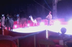 Le cirque Claudio Zavatta à Saint-Nazaire 2016 spectacle (5)