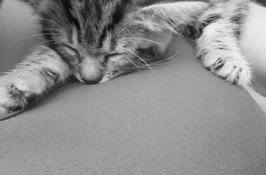 voila mes deux passions réunis la photographie et mon chat