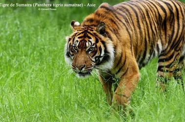 Le plus grand Parc Animalier de France est situé dans l'Indre