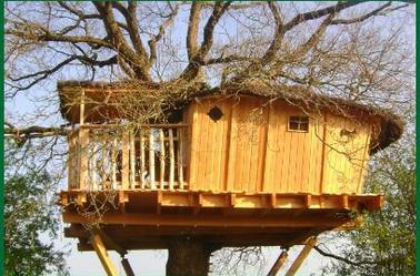 Vivez votre rêve d'enfant : dormir dans un arbre...