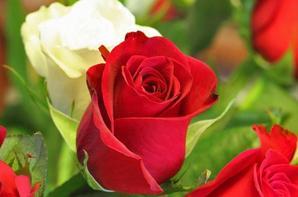 Joyeux anniversaire mon coeur ,ma joie,mon amour