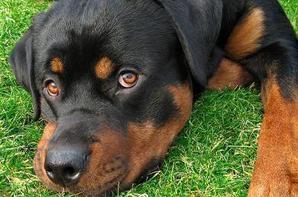 le meilleur chien du monde