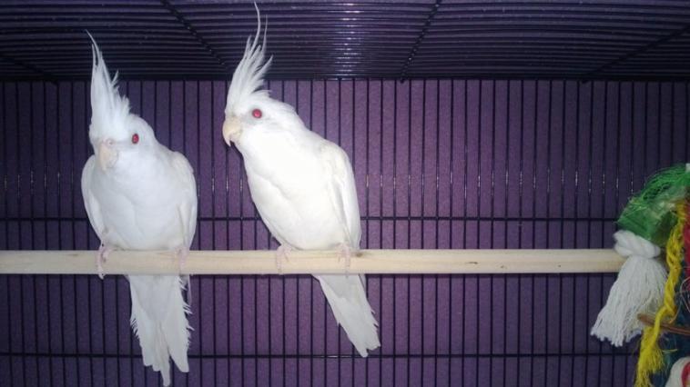 Les mâles albinos à l'instant.