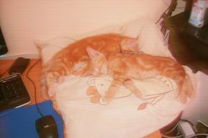 mes chatons et le rat