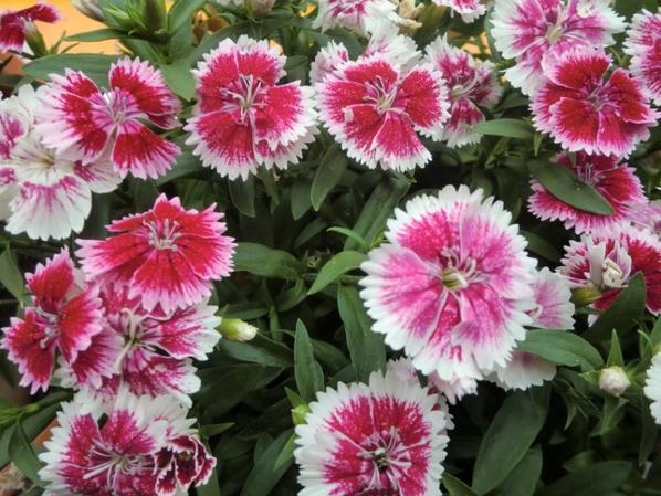 mes fleurs du moment.....