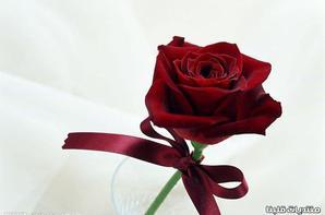 Pour tous les amis, je vous aime