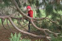 aujourd'hui dans les bois de Balaison