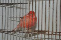mais oiseaux lacher vos comentaires et dit moi tout squ vous penser :)
