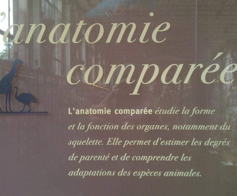 Paris : la galerie d'anatomie comparée