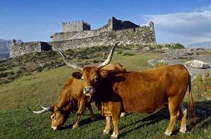 Un peu d´histoire de notre beau paradis Portugais oú vous pouvez passer des vacances de rêve oú même construire votre joli chalet.
