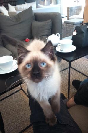 Le café des félins et ses 4 chats