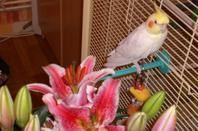 LiLi avec les fleurs de Lys