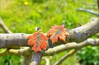 Champignons et feuilles