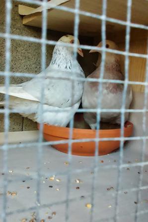 nouveaux pigeons ...nouveaux casier