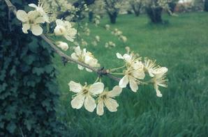 *.Mes Photographies.* (Nature)