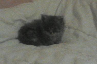 mon chat rocco