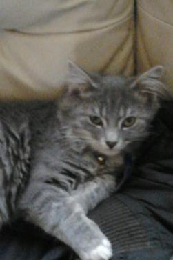 Mon gros bebe : Mon chat <3