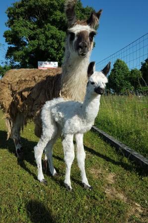 28 mai naissance (bébé lamateau réservé )