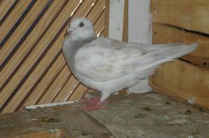 2femelle 2011 male 2011