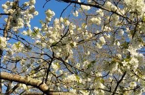 Jardin d'Avril