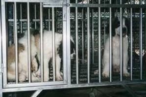 animaux torturé dites stop!!