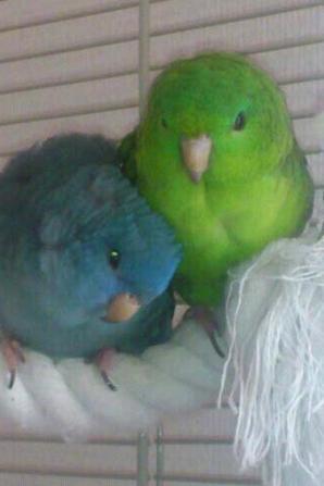 Véga et Chico