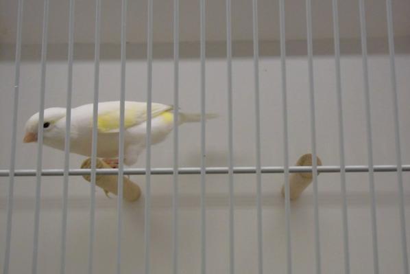Vogel 2014 vogels van Spenkelink Huub