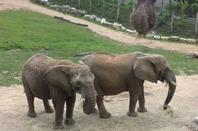 sortie famille au zoo de Beauval le 9 juin 2018
