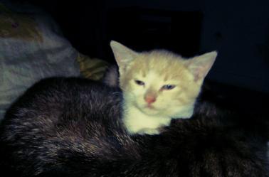 Loulou et le nouvel arrivant : Spiky  ♥ , deux mois et demi.