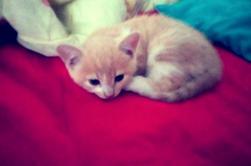 Voici Spiky,  le nouveau de la famille,  2,5 mois...  ?