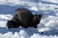 Encore dans la neige