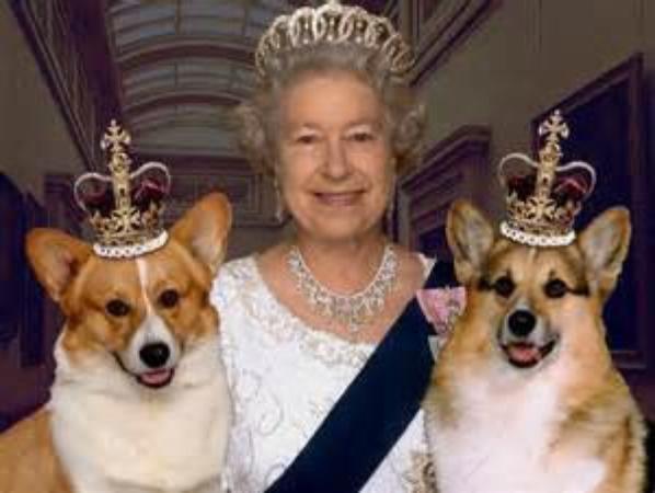 Le cheval et les chiens couronnés de la reine Elisabeth