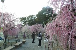 PHOTOS pruniers en fleurs