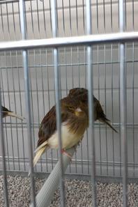 voila j'ai mis quelques photos de mes oiseaux dans leur cage de vol