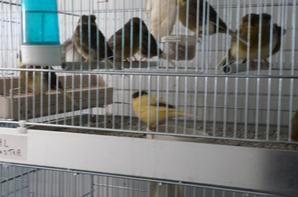 moi et mes petits oiseaux