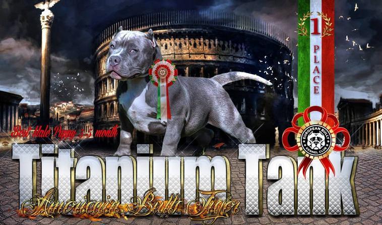 SHOW BULLY ITALY E.B.K.C 2013 NAPLES