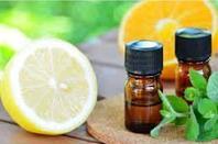 Citronnelle, Plante médicinale a la propriété très connue d'éloigner les moustiques, tiques, insectes.