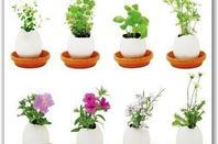 Les plantes qui éloignent les insectes. Tout répulsif jugé sans danger peut servir à imprégner