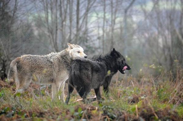 Le Parc Animalier des Monts de Guéret deux nouveaux pensionnaires