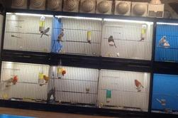 Bird room 2016
