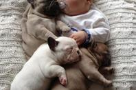 Three-month-old baby and three months old bulldog
